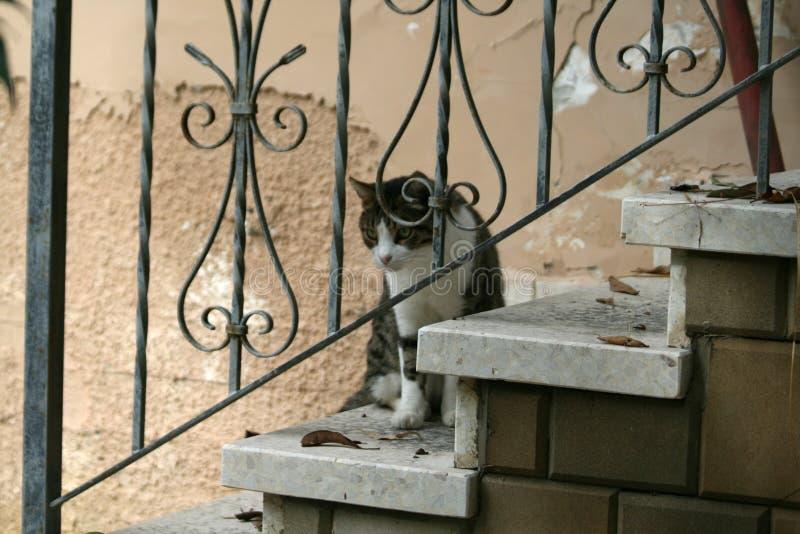 Кот на лестницах стоковые изображения