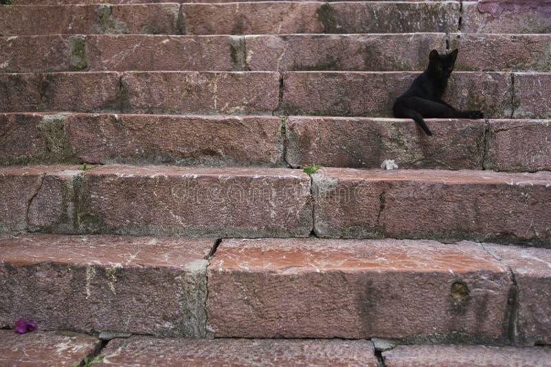 Кот на лестницы стоковая фотография rf