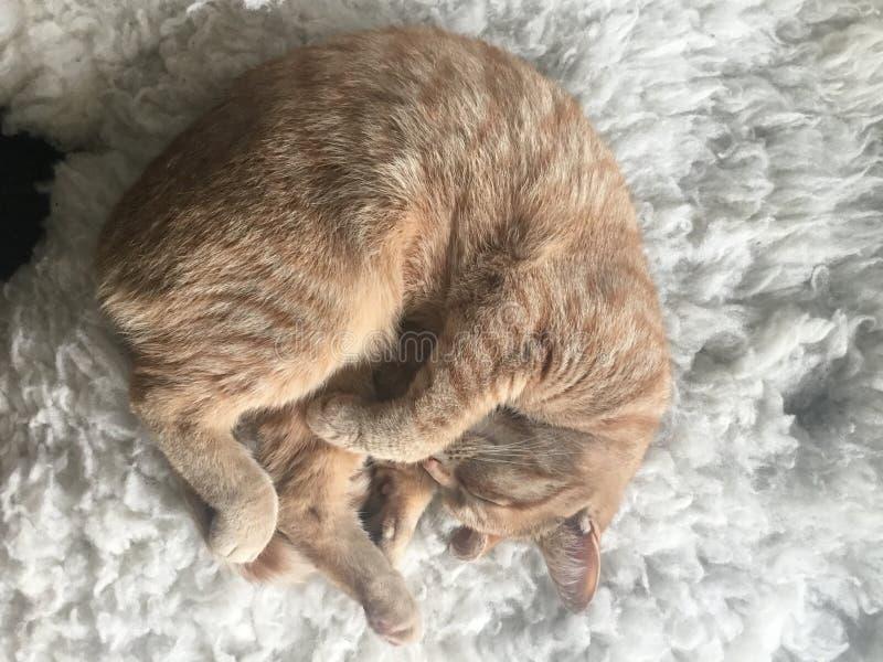 Кот на мехе стоковое изображение rf