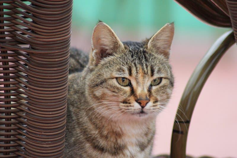 Кот на пляже стоковая фотография