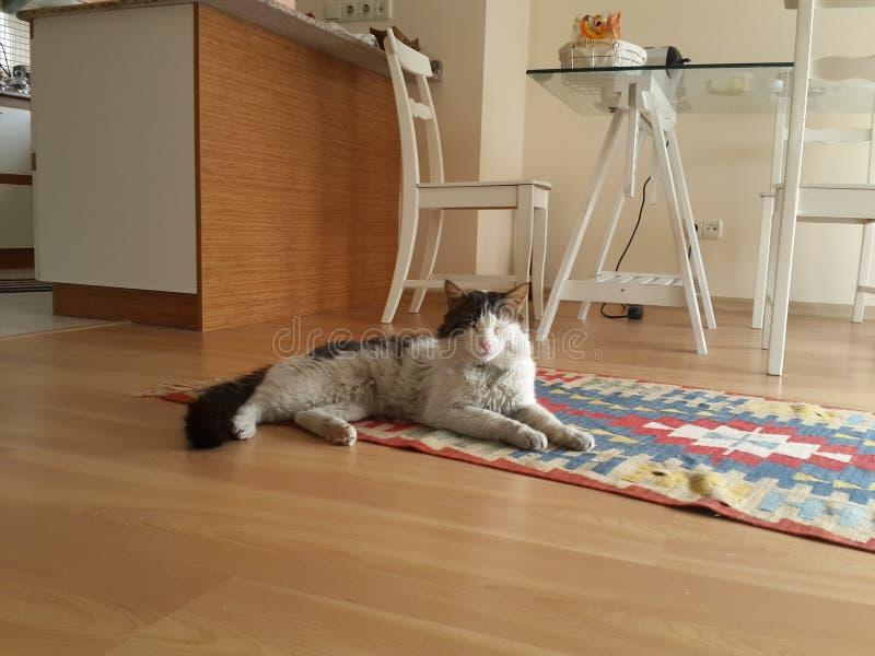 Кот на половике стоковые фотографии rf