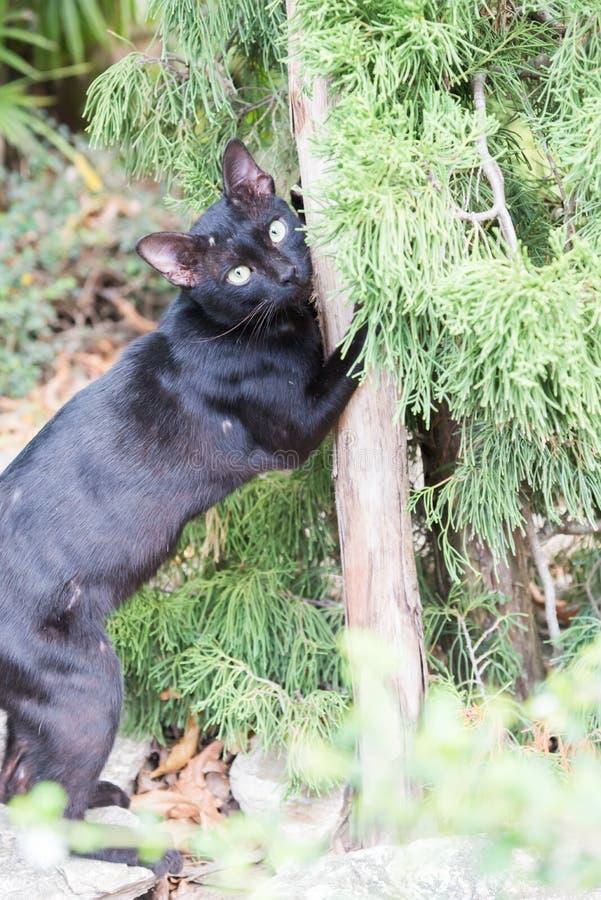 Кот на поляке стоковая фотография rf