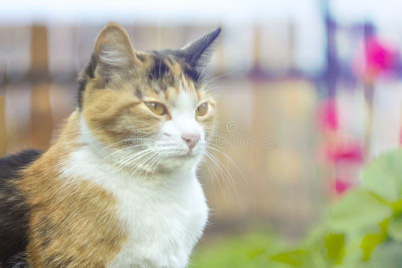 Кот на предпосылке цветков с влиянием bokeh, на заходе солнца стоковая фотография rf