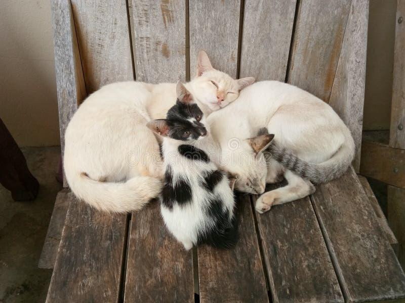 Кот на стуле стоковые фотографии rf