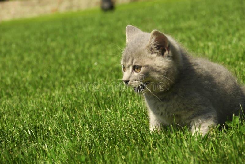 Кот на траве стоковые фотографии rf