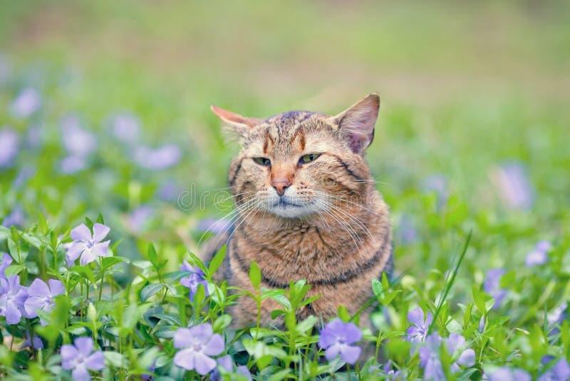 Download Кот на лужайке барвинка стоковое изображение. изображение насчитывающей сад - 41653305