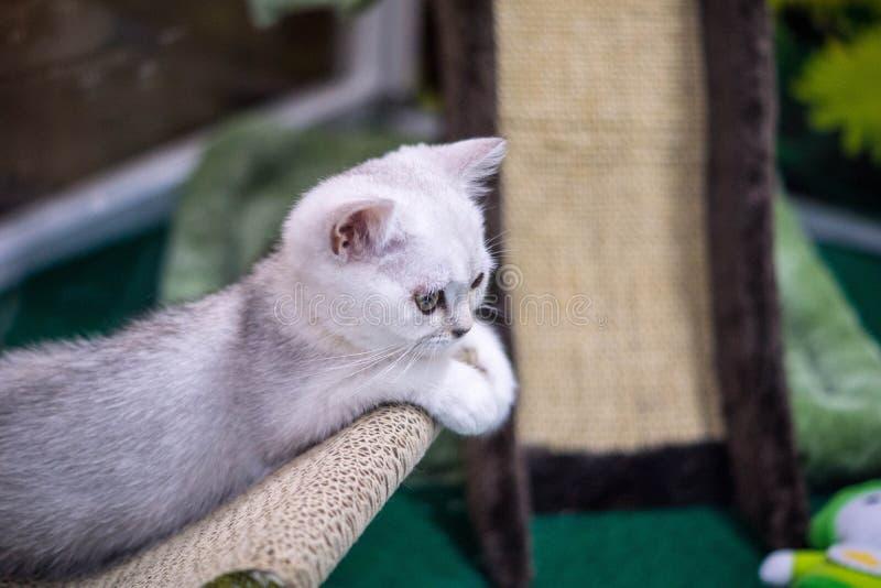 кот немногая белое стоковые изображения rf