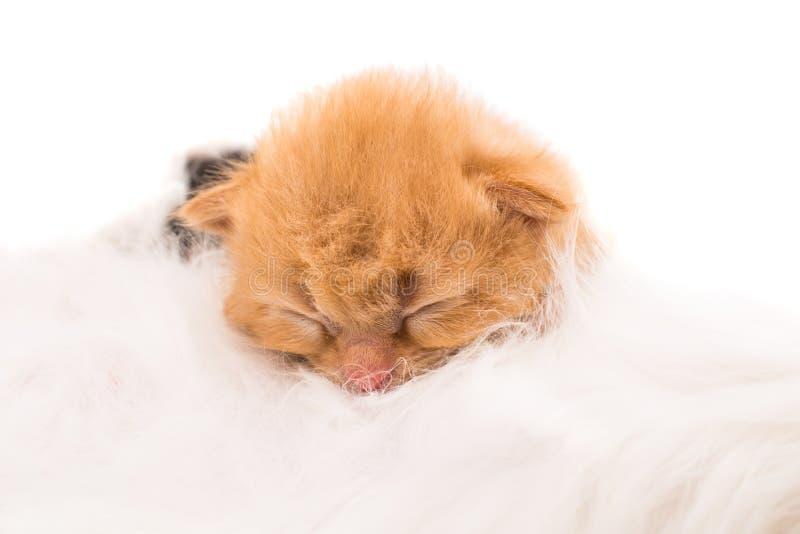 Кот нянча newborn котенка стоковая фотография rf