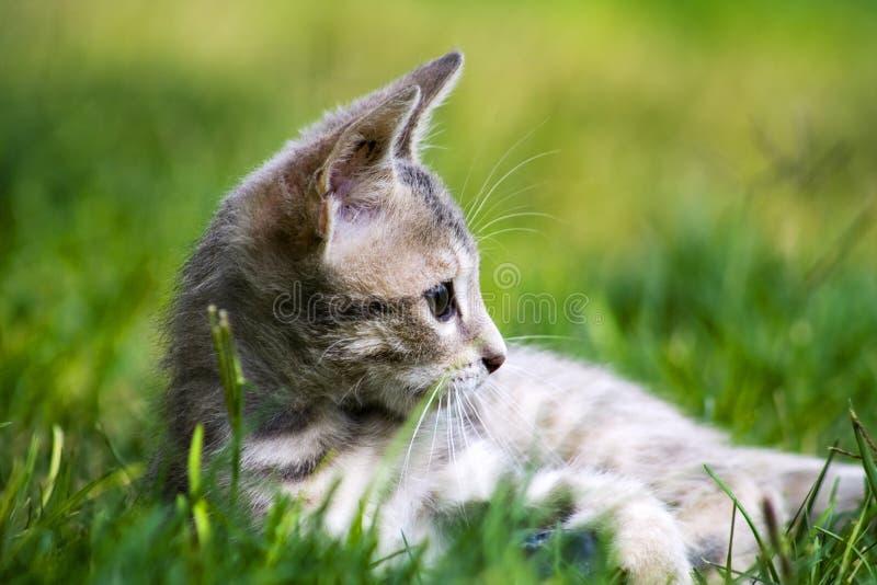 кот одичалый стоковые фотографии rf