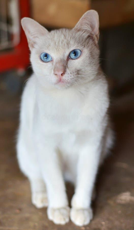 кот осени поздно сидя белизна стоковые фотографии rf