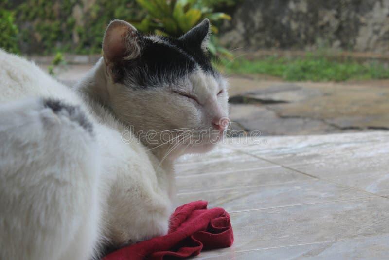кот ослабляя стоковые фотографии rf