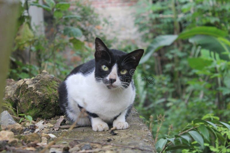 кот ослабляя стоковое изображение