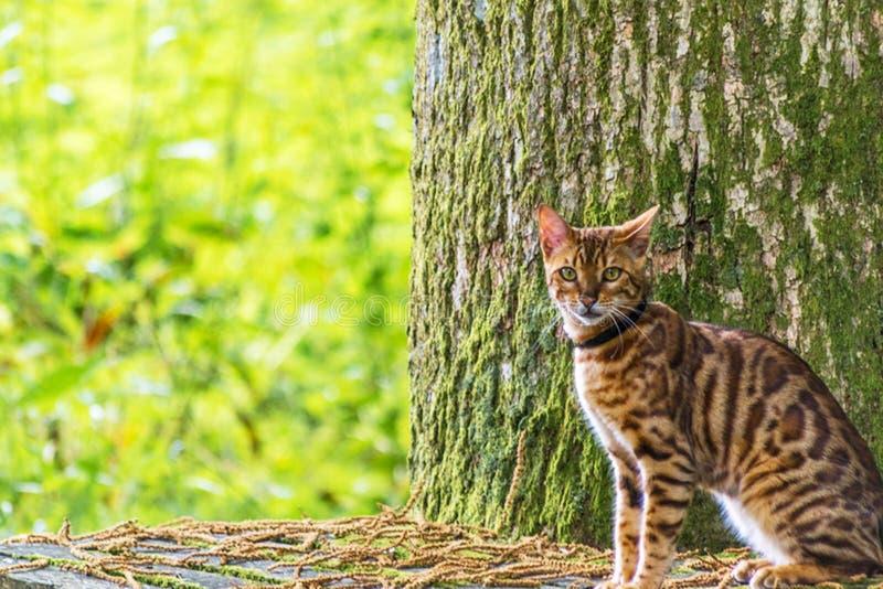 Кот отдыхая на стенде стоковое фото