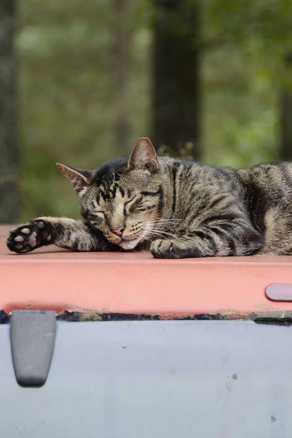 Кот отдыхая на верхней части тележки в Миссури стоковые фото