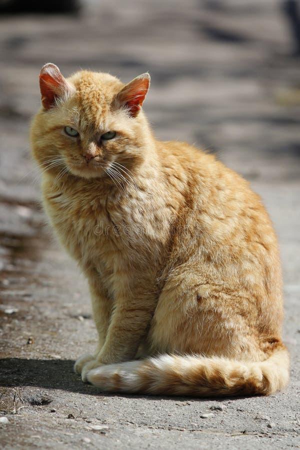кот одичалый стоковое фото
