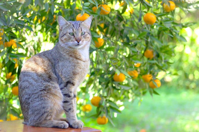 Кот перед деревом цитруса стоковое изображение