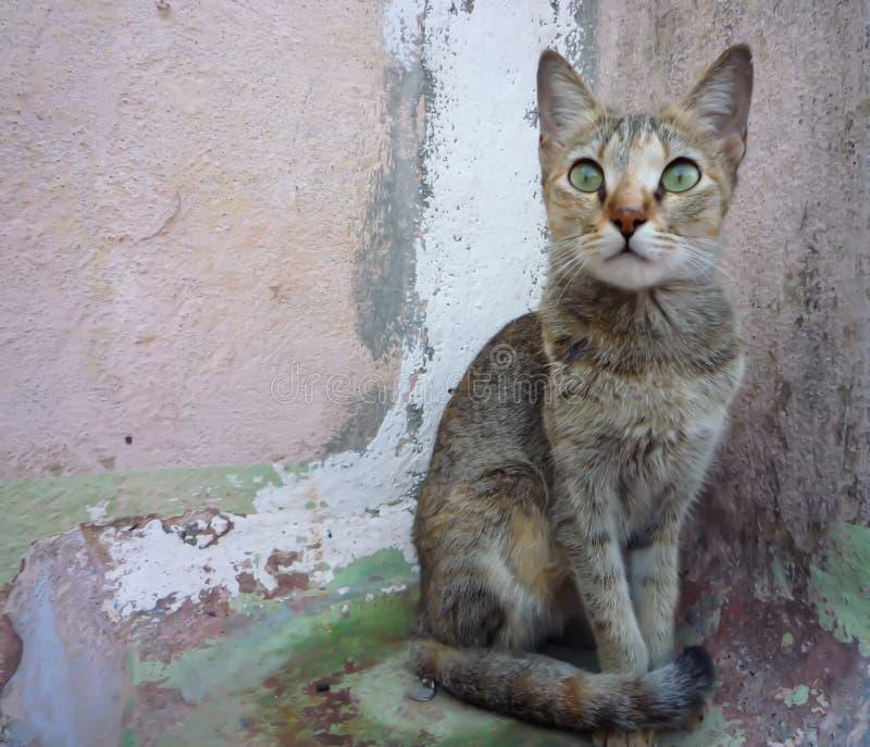 Кот-питомник стоковое изображение