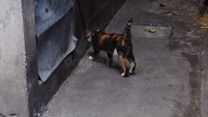 Кот поворачивает назад с темной предпосылкой стоковая фотография rf
