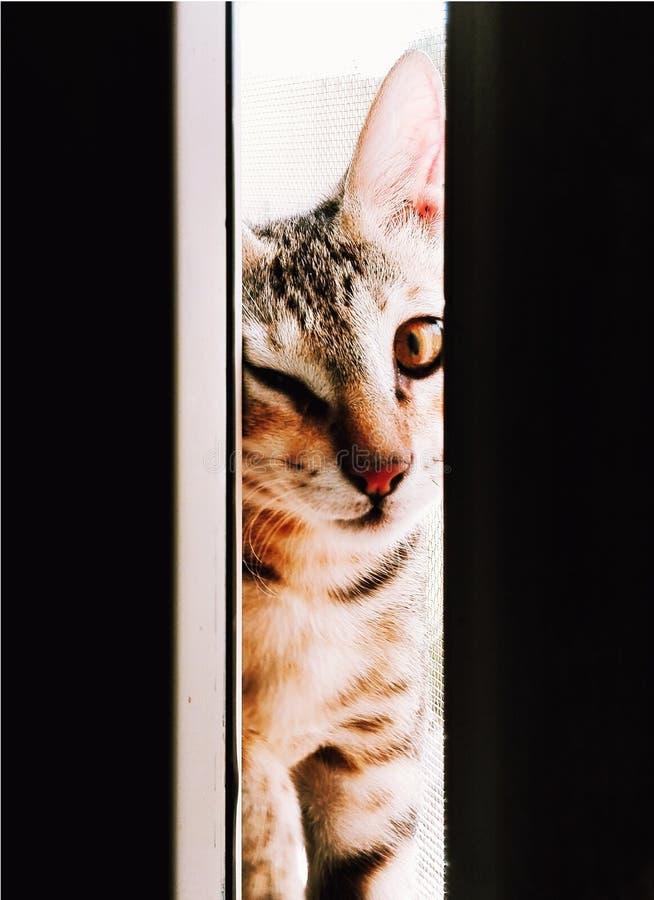 Кот подмигивает стоковая фотография