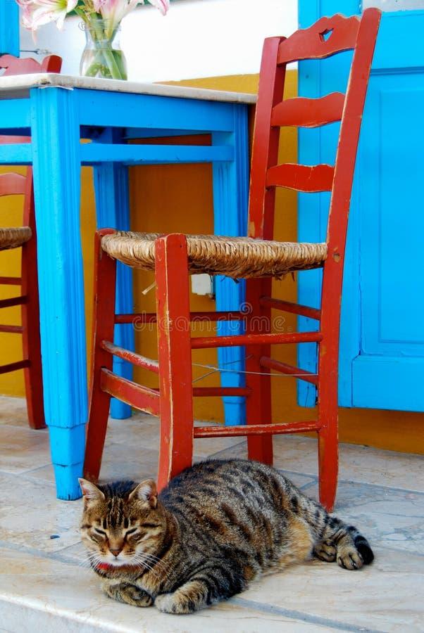 Кот под стулом и таблицей стоковое фото rf