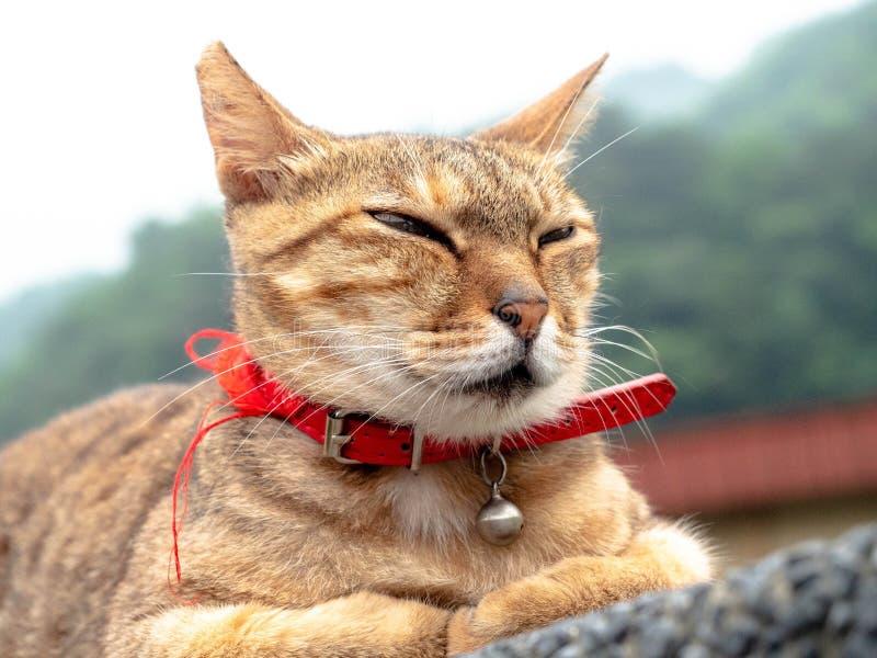 Кот портрета белый с красным воротником на стене на деревне кота Houtong в Ruifang стоковые фотографии rf