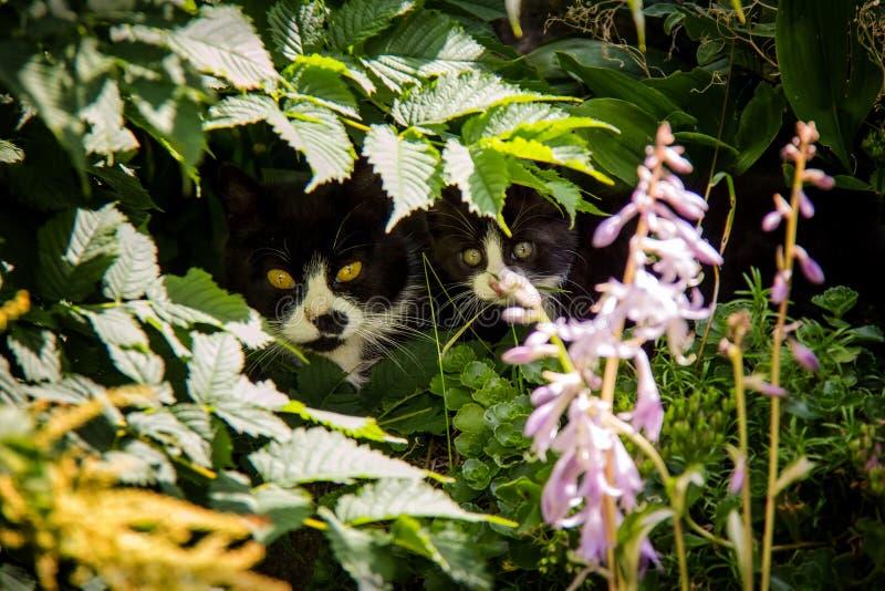 Кот при его котенок спрятанный в саде стоковые фотографии rf