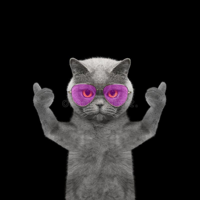 Кот при стекла показывая большой палец руки вверх и гостеприимсва -- Изолят на bla стоковая фотография