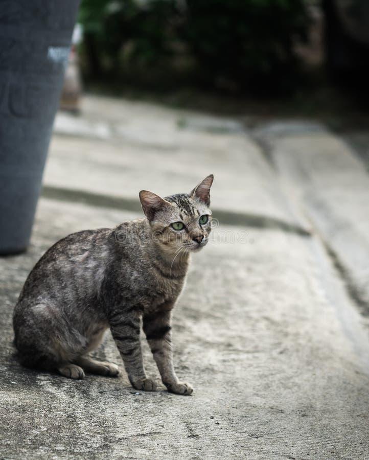 Кот рассеянного tabby милый стоковая фотография