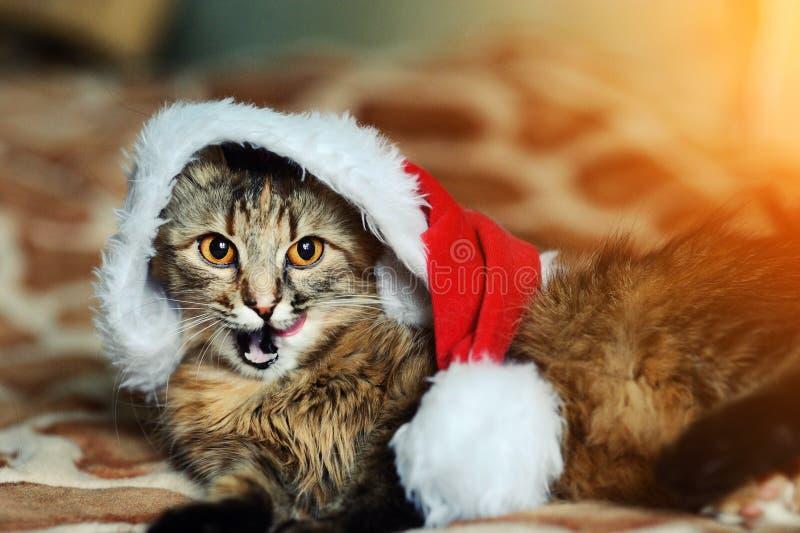 кот рождества в красной шляпе Санта Клауса стоковое фото rf