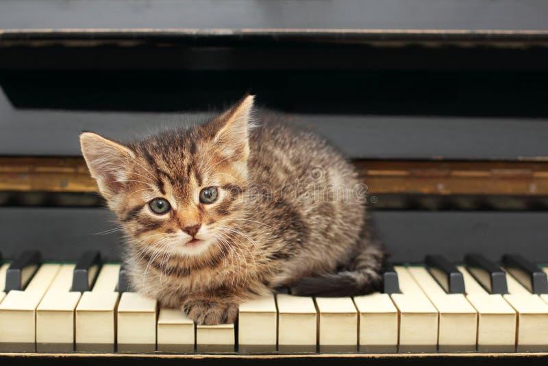 Кот рояля Музыкант, музыка стоковые изображения rf