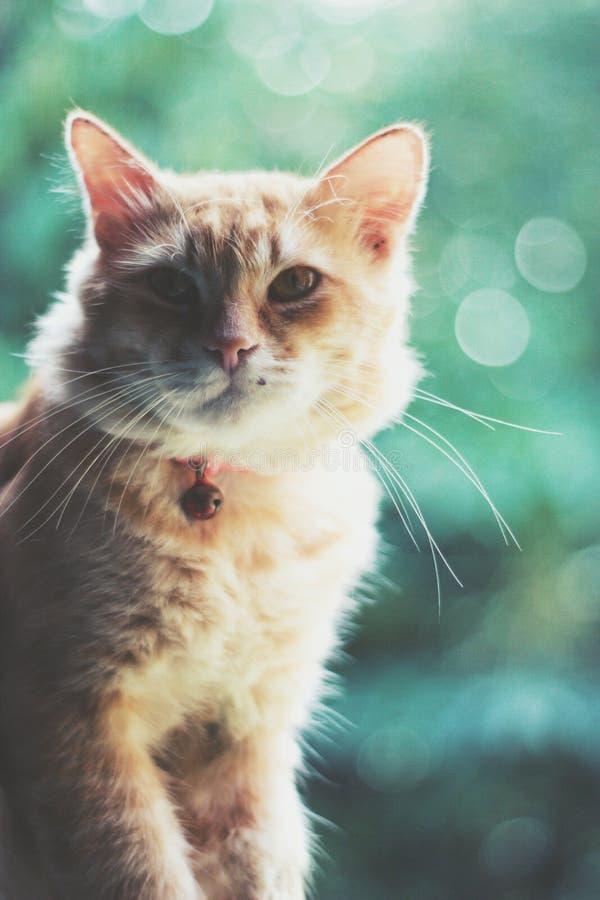 Кот самостоятельно стоковые фото