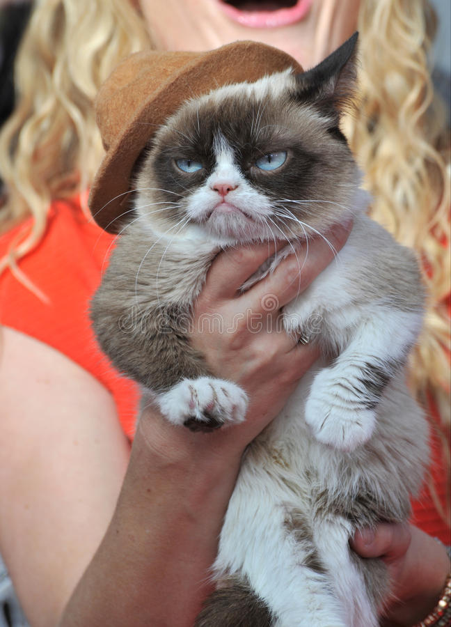 кот сварливый стоковая фотография