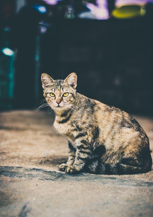 Кот сердитый стоковые фото