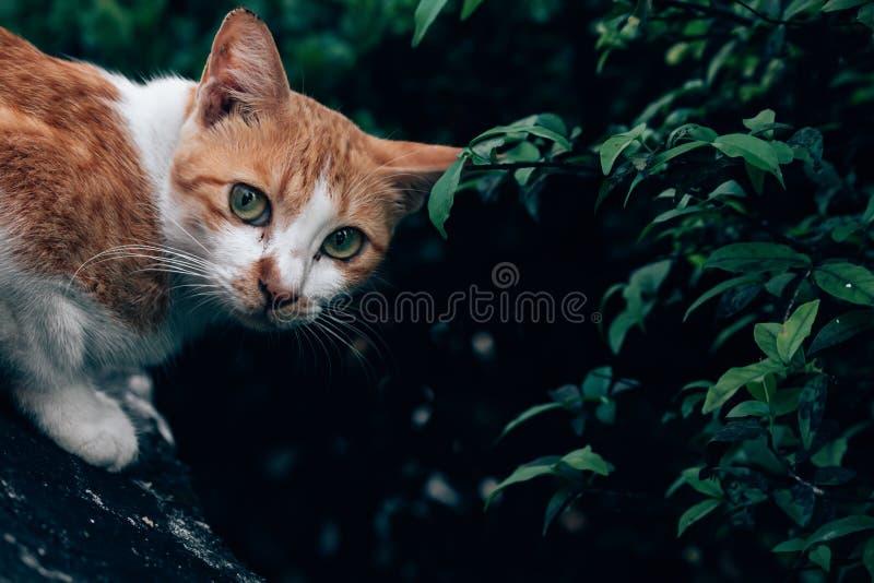 кот сидит и смотрящ камеру вокруг зеленого куста стоковые изображения rf
