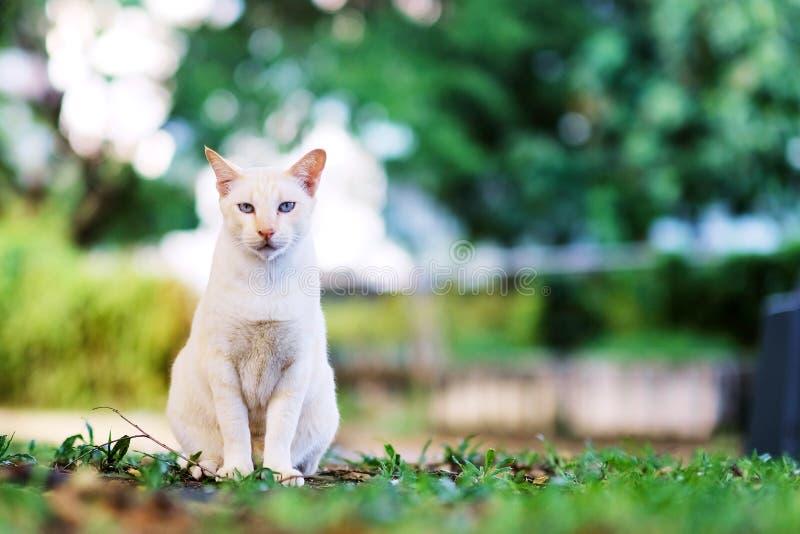 Кот сидит на траве в саде стоковые изображения