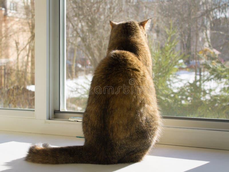 Кот сидит на windowsill и смотрит вне открытое окно через сетку от комаров стоковое фото