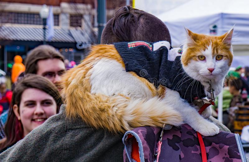 Кот сидя на его плечах Owner's стоковые фото