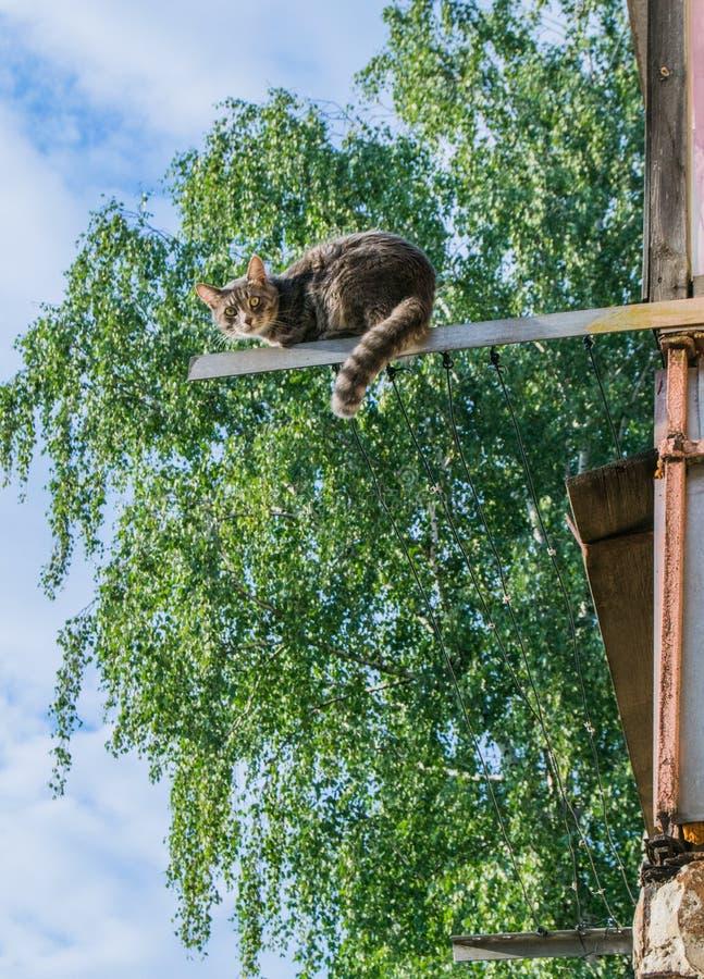 Кот сидя на старом сушильщике одежд против дерева стоковое изображение rf