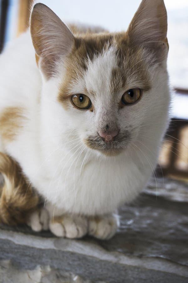 Кот сидя на стене патио снаружи стоковая фотография rf