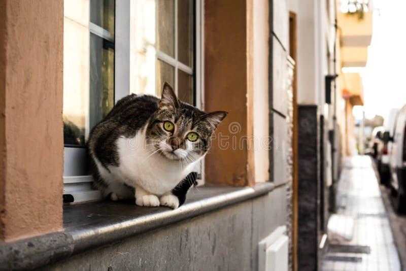 Кот сидя на windowsill стоковое фото rf