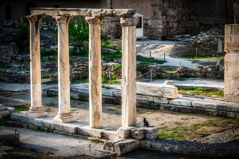 Кот сидя рядом с римскими руинами стоковые фотографии rf