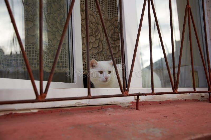 Кот сидя на окне за решеткой стоковое изображение