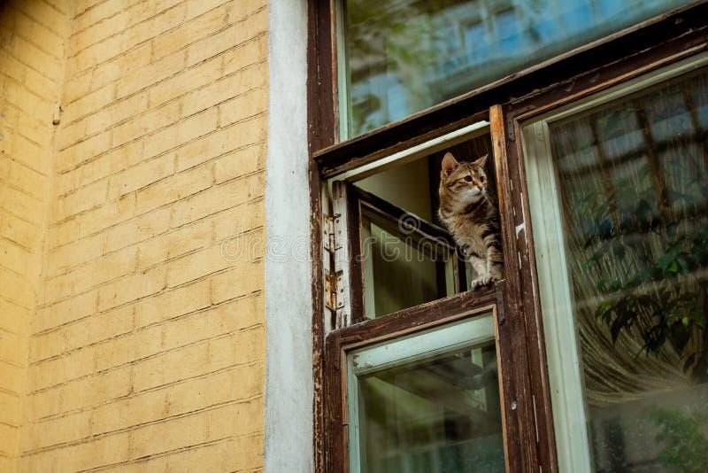 Кот смотрит из окна стоковые изображения rf