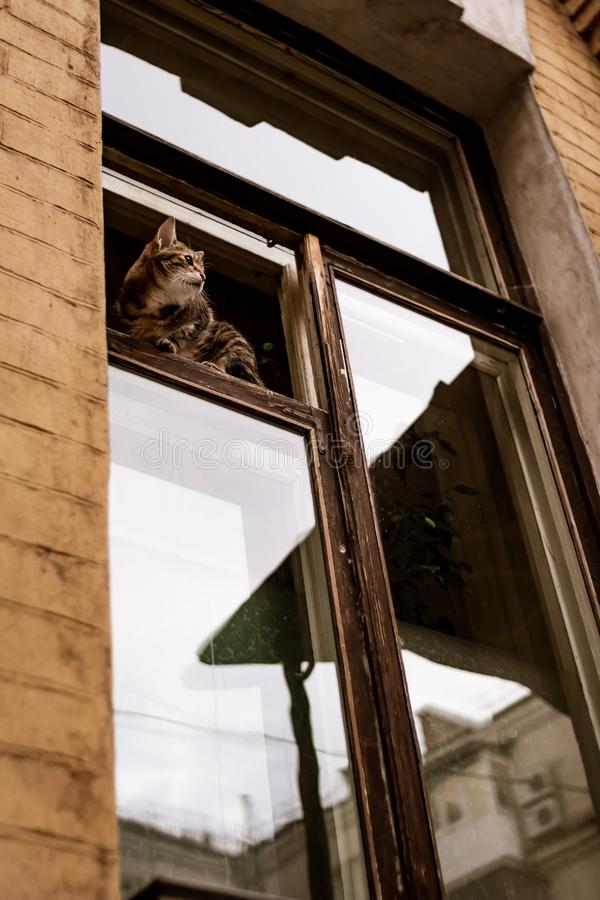 Кот смотрит из окна стоковые изображения