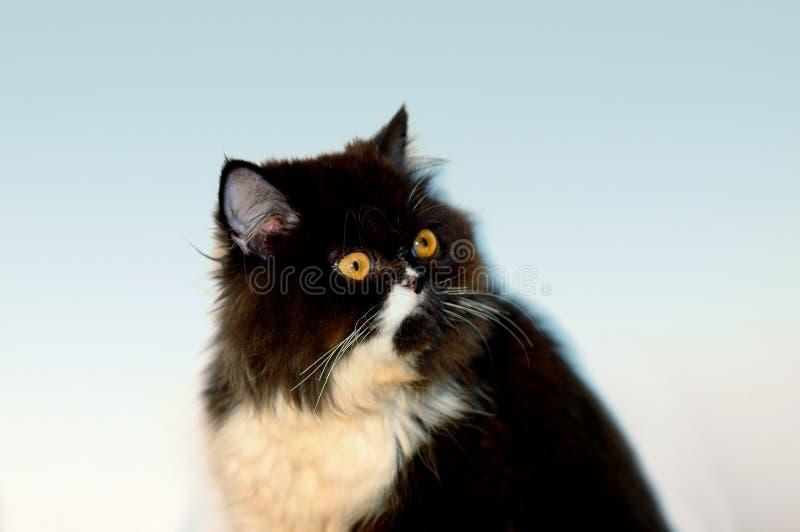 Download кот смотря вверх стоковое фото. изображение насчитывающей любимчик - 77656