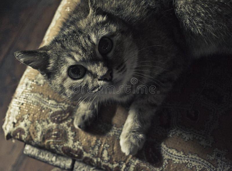 кот смотря вверх стоковые изображения