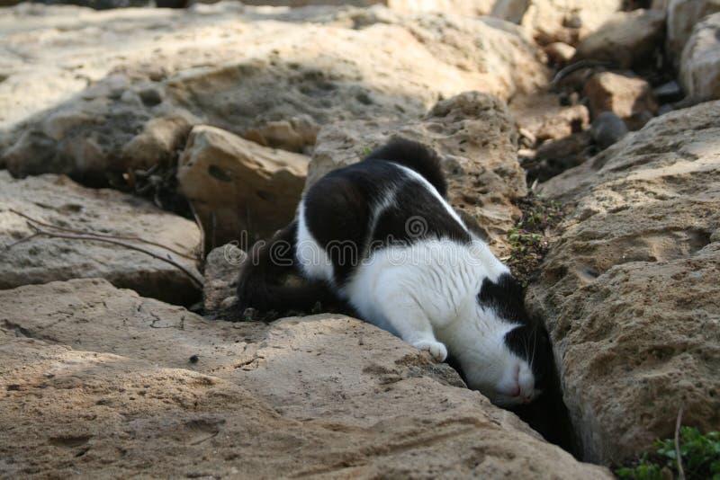 Кот смотря в зазор между утесами стоковые изображения