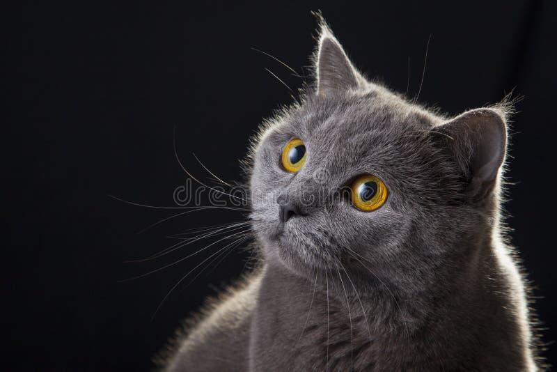 Кот смотря портрет стоковая фотография rf