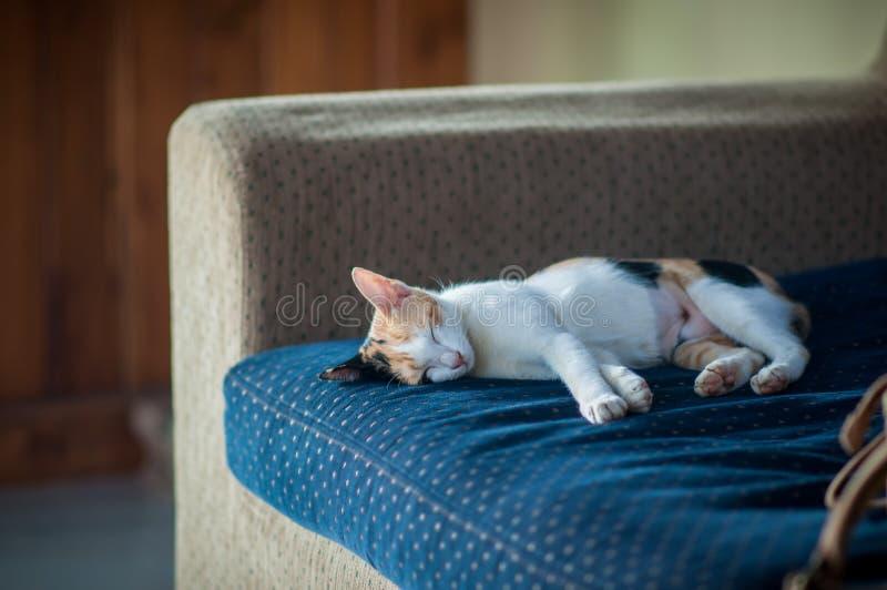 Кот сна стоковая фотография rf
