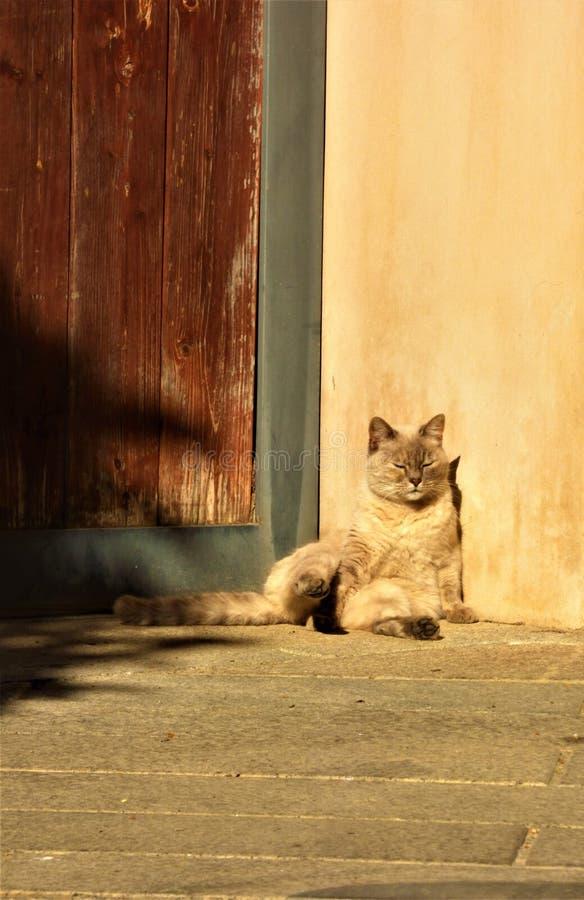 Кот Солнця загорая стоковые фотографии rf